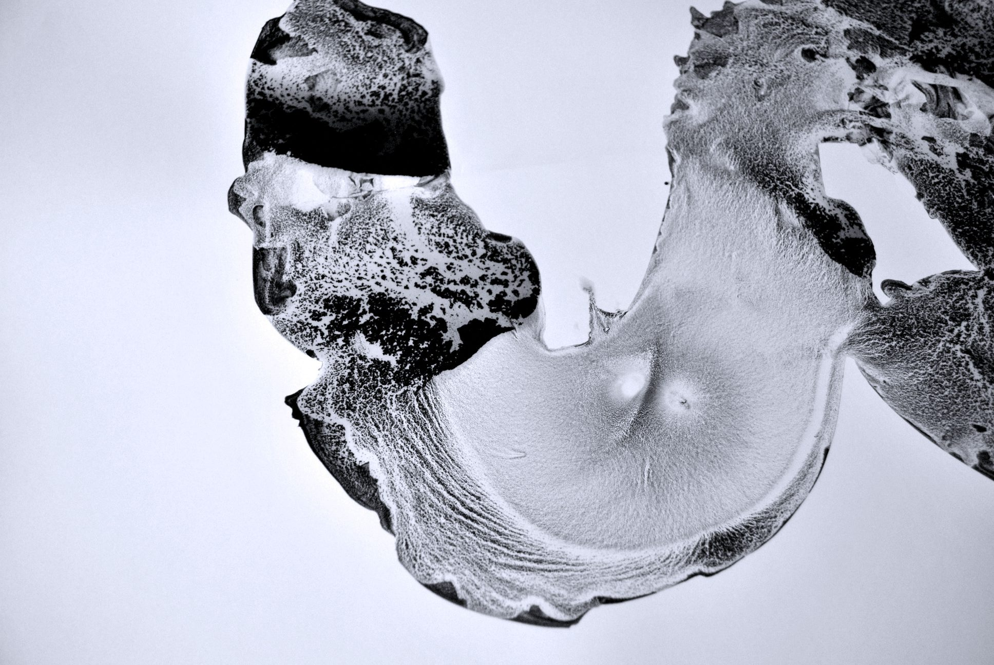 Japanese artwork series - monoqrome.co
